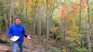Lake Keowee Real Estate Video Update November 2019 Mike Matt Roach Top Guns Realty