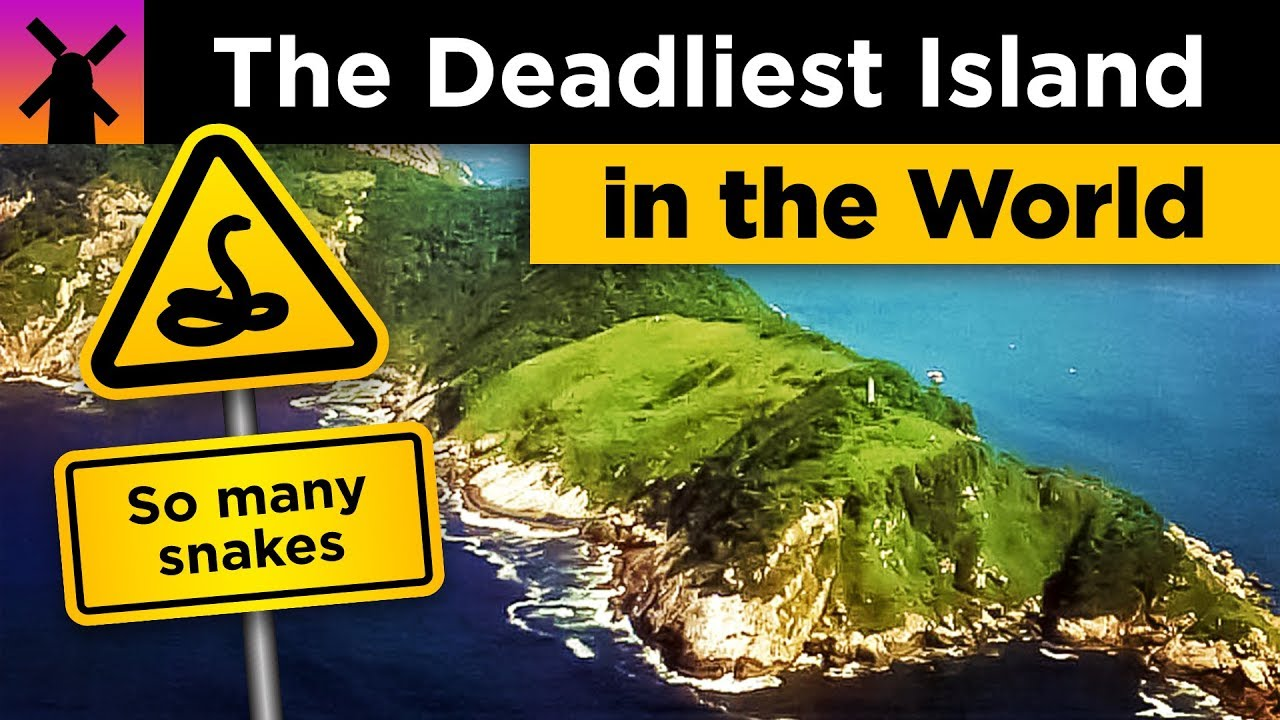 The Deadliest Island in the World: Snake Island Explained thumbnail