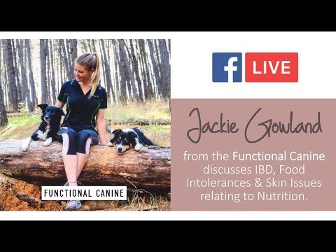 , title : 'Canine IBD, Food Intolerances & Skin Issues relating to Nutrition