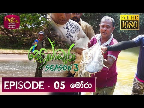 Sobadhara - Sri Lanka Wildlife Documentary | 2019-03-29 | Shark in Sri Lanka