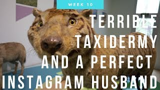 Terrible Taxidermy and a Perfect Instagram Husband