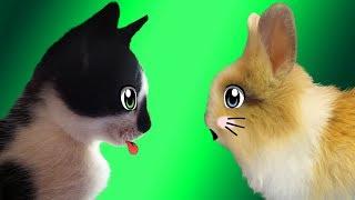 Кролик БАФФИ и КОТ МАЛЫШ ! СПИННЕР кролика БАФФИ ! Кот в гостях у кролика