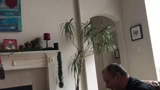 Dog barks at Alexa for barking like a dog!!!