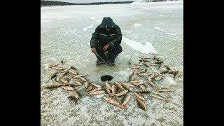 Ловля крупного окуня зимой на севере