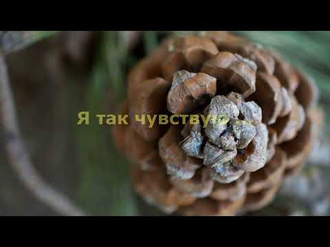 Hislerim (ft. Zerrin)перевод на русском