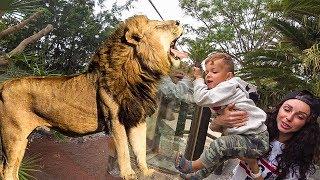 ВЫЖИВАНИЕ В ДЖУНГЛЯХ. Kids and wild animals At The Mountain Zoo: Lion and monkey with kids