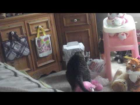 Cat Humping Stuff Bear