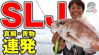 【USHIO】真鯛、ハマチが連発!ナカジーの大阪湾スーパーライトジギング(SLJ)