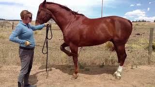 How To Teach A Horse Piaffe Part 9