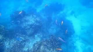 Bei den Fischen auf den Similan-islands