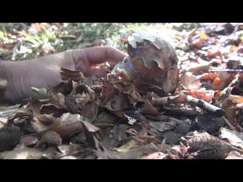Il domiks Green significa per unghie di piedi risposte di fungo