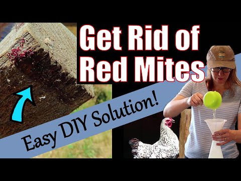 , title : 'How to get rid of Red Mite in Chicken Coop