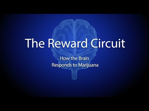 The Reward Circuit: How the Brain Responds to Marijuana