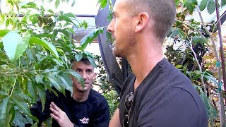 Insane Backyard Garden Tour | 300 Fruit Trees On 1/8 Acre | Part 5
