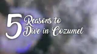 Reasons to #Dive in #Cozumel
