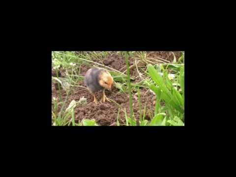Die Kaninchen die Würmer die Behandlung des Fotos