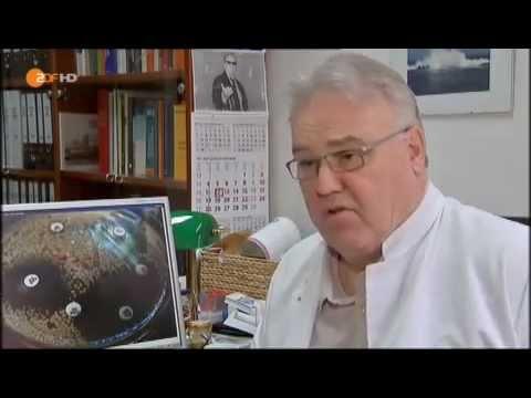 Oregano Gegenanzeigen für Prostata