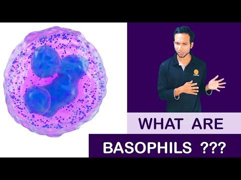Paraziták és giardia kezelés