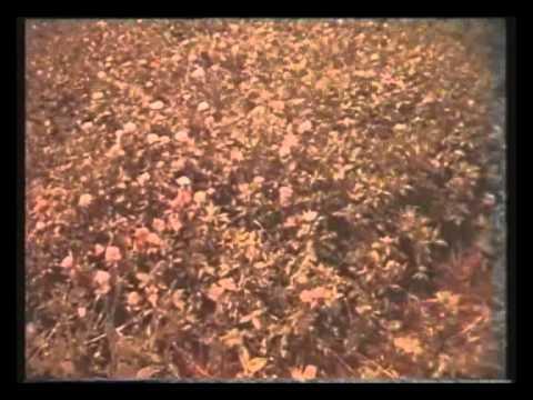 Технология производства продуктов пчеловодства. СССР Центрнаучфильм.