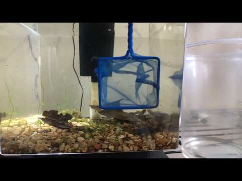 Ep. 8 POISON DART FROG - BREED - EGG TADPOLE CARE - HOW TO