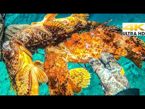 Spearfishing 🇬🇷 | VENOMOUS SCORPION FISH EXTRAVAGANZA🔥 CATCH CLEAN COOK [4K]✅