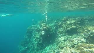Самый красивый коралловый риф в Египте. Отель Novotel Marsa Alam? Смотрите сами и поражайтесь))