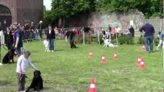 preview picture of video 'Initiation à l'obéissance - Journée du chien du Moulin Blanc'