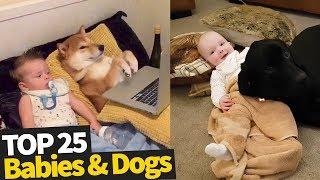 animales Perros y bebés