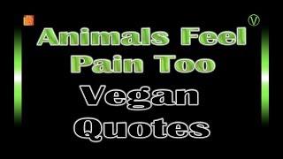 Animals Feel Pain Too   Vegan Quotes