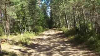 Велопрогулка по лесу. Ободрал руку при падении