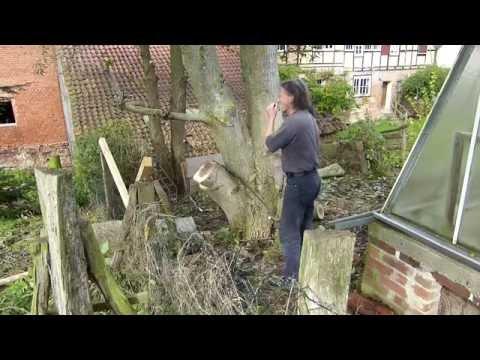 Baum fällen mit der Schrotsäge, Nußbaum schneiden