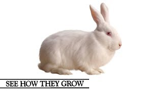See How They Grow | Rabbit
