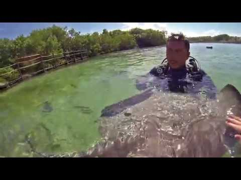 A stingray experience at Xel-Ha Park, Mexico