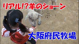 リアル羊のショーン!? 大阪府民牧場で遊びました