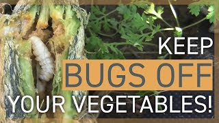 Keep Bugs Off My Vegetables! How to Deal With Insects in the Garden