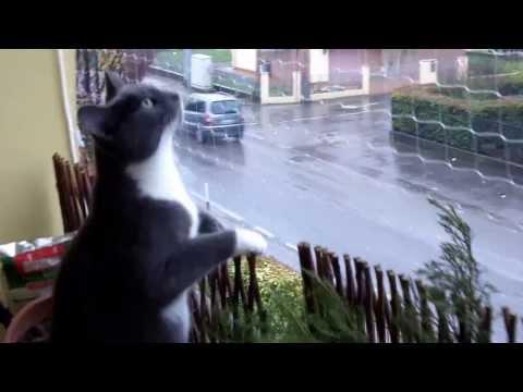 Gattini in sicurezza: la rete protettiva sul balcone 2