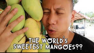 WHERE THE SWEETEST MANGOES IN THE WORLD ARE GROWN (GUIMARAS, PHILIPPINES) | Vlog #87