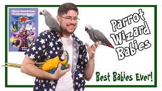 Why These Baby Parrots Are Like No Other!