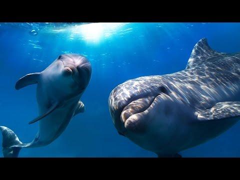 Дельфины целители...