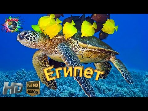 Египет. Красного моря .Экзотические обитатели/ Egypt.Red Sea. Exotic inhabitants. HD.