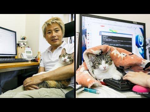 Empresa japonesa usa gatos para melhorar o ambiente