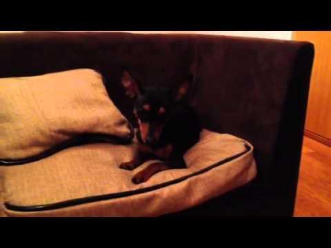 Divano per Cani Mr. Dog Sofà in Ecopelle e Tessuto Brown