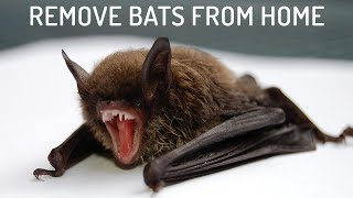 9 Easiest Ways to Get Rid of Bats
