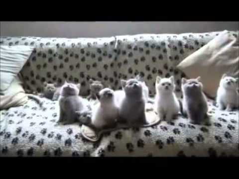 A chorus of voices from cat,terrific !!! / Kediden sesler korosu :)