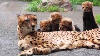 ぬいぐるみ!みたいなおもしろかわいい動物の赤ちゃん大集合!!funnyvideo2015