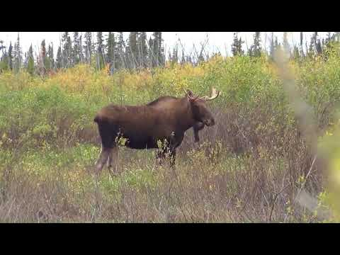 Moose 2017 Agassiz Outfitters
