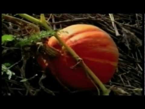 Il giardino di emilia hazelip 3 parti in italiano - Il giardino italiano ...