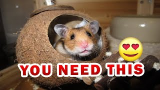 Best kind of bedding for hamsters That actually work