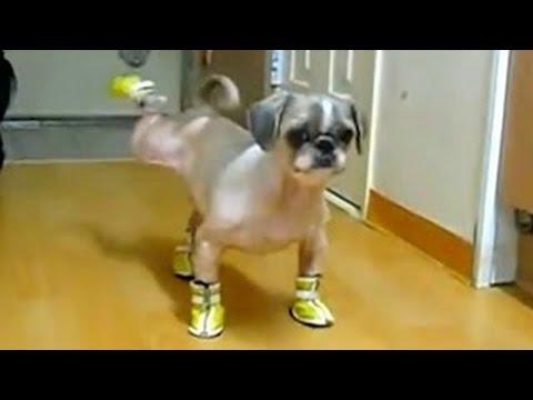 Videos Graciosos De Perros Y Gatos Usando Zapatos ❤ No Lo Vas A Creer Cuando Lo Veas