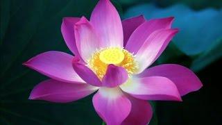 Kinh Pháp Cú  Lời Vàng Phật Dạy  HT. Thích Minh Châu Dịch